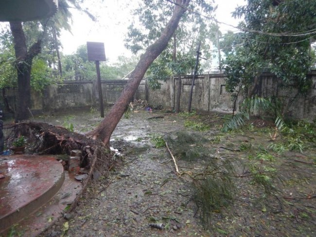 A fallen tree in the MSF compound