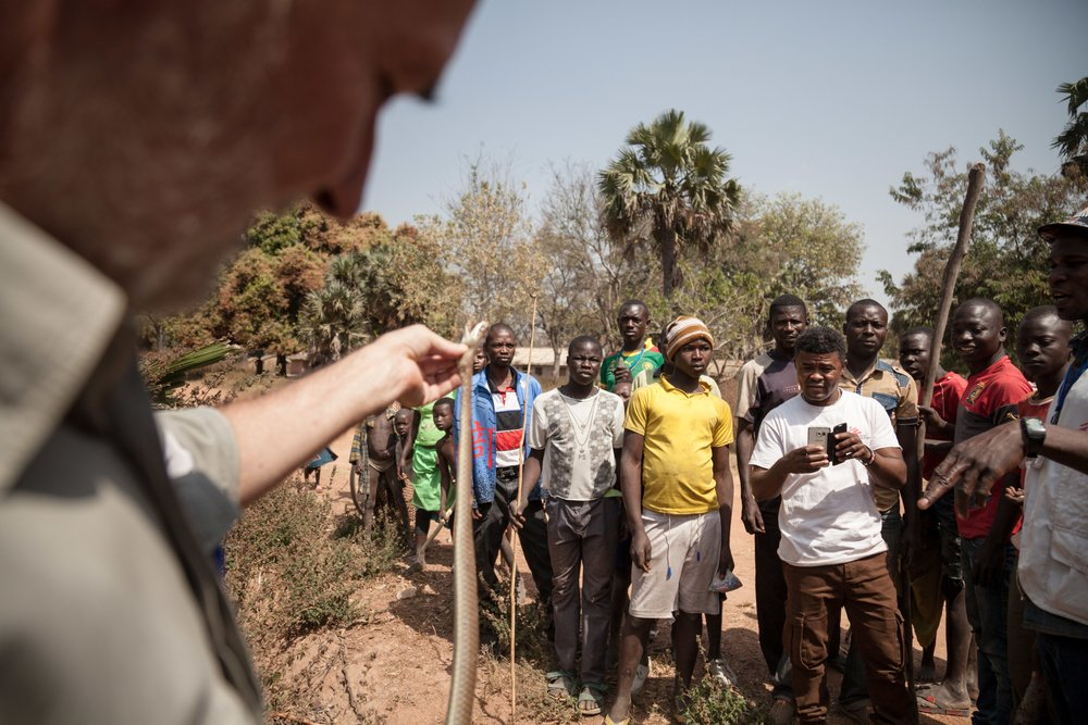 Jean Ospital, MSF field coordinator in Paoua Region, explains to the villagers who killed the snake (a green mamba), how not to hurt themselves by manipulating the dead body of the snake.